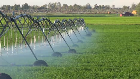 An-industrial-sprinkler-system-waters-California-farmland-during-a-drought-2