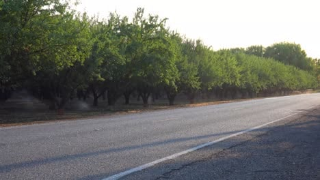 Almond-trees-are-watered-in-a-California-field-during-a-period-of-drought
