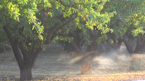 Almond-trees-are-watered-in-a-California-field-during-a-period-of-drought-1