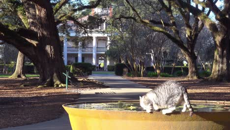 A-cat-drinks-from-a-fountain-in-front-of-a-beautiful-gracious-Southern-mansion-on-an-estate-amongst-oak-trees
