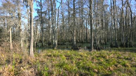 Aufnahme-Eines-Dichten-Mangrovensumpfes-In-Louisiana