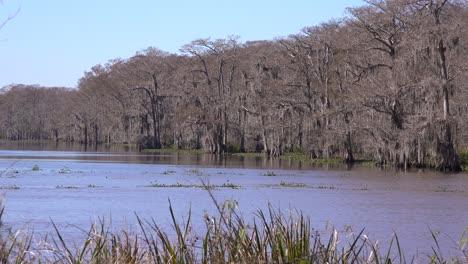 Establishing-shot-of-a-thick-mangrove-swamp-in-Louisiana-2
