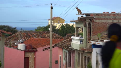A-dog-stands-high-on-the-top-of-a-building-looking-out-over-the-city-of-Trinidad-Cuba