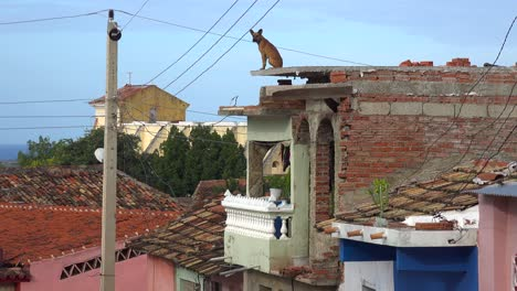 A-dog-stands-high-on-the-top-of-a-building-looking-out-over-the-city-of-Trinidad-Cuba-1