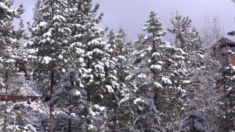 El-Hielo-Y-La-Nieve-Cuelgan-De-Los-Pinos-En-Un-Claro-Del-Bosque-En-Invierno-1