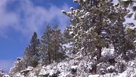 El-Hielo-Y-La-Nieve-Cuelgan-De-Los-Pinos-En-Un-Claro-Del-Bosque-En-Invierno-2