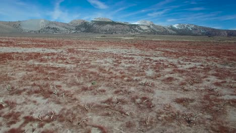 Beautiful-aerial-shot-over-red-sagebrush-reveals-the-Mono-volcano-cones-in-the-Eastern-Sierra-Nevada-mountains