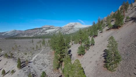 High-aerial-shot-over-a-ridge-with-pines-reveals-the-Mono-volcano-cones-in-the-Eastern-Sierra-Nevada-mountains