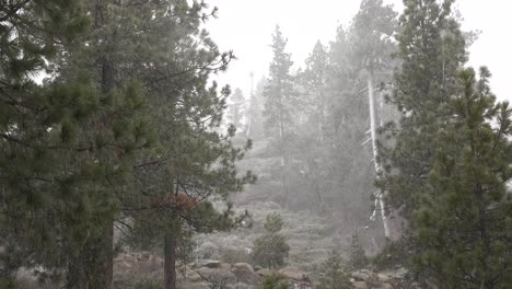 A-blinding-snowstorm-strikes-in-the-Sierra-Nevada-mountains-at-Lake-Tahoe-2