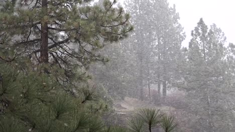 A-blinding-snowstorm-strikes-in-the-Sierra-Nevada-mountains-1