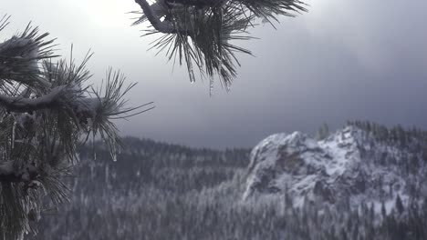 Icicles-hang-from-a-pine-branch-in-front-of-a-beautiful-snow-scene-in-winter-in-the-high-Sierra-Nevada-mountains