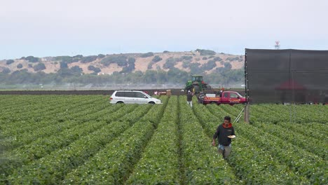 A-strawberry-picker-from-Mexico-works-in-the-California-fields