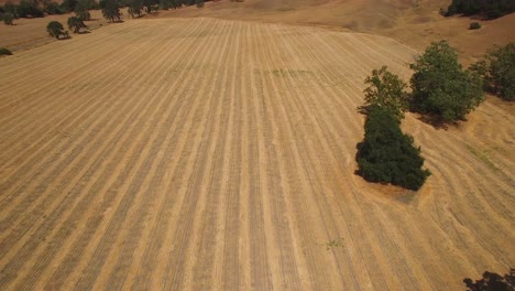 Aerial-footage-of-the-agricultural-fields-oak-trees-and-farms-of-Central-California