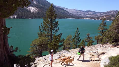 A-group-of-hikers-and-dogs-walk-in-the-Desolation-Wilderness-of-the-Sierra-Nevada-mountains