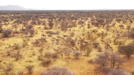 La-Notable-Antena-De-Drones-Sigue-A-Una-Gran-Manada-De-Antílopes-Eland-En-La-Sabana-De-África-Y-Una-Excelente-Toma-De-Acción-De-Safari-De-Vida-Silvestre