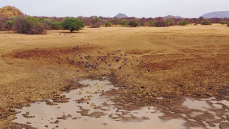 An-aerial-shot-of-a-group-of-Guinea-Fowl-birds-busting-into-flight-from-a-watering-hole-in-Africa