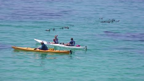 Kayakistas-Remar-Pasado-Jackass-Pingüinos-De-Patas-Negras-Nadando-En-Las-Aguas-Del-Océano-Atlántico-Frente-A-Sudáfrica