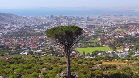 Antena-Sobre-El-Horizonte-Del-Centro-De-Ciudad-Del-Cabo-Sudáfrica-Desde-La-Ladera-Con-Acacia-En-Primer-Plano