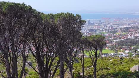 Revelar-La-Antena-Del-Horizonte-Del-Centro-De-Cape-Town-South-Africa-Desde-La-Ladera-Con-Acacia-En-Primer-Plano-1