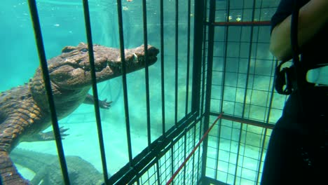 A-woman-cage-dives-with-African-crocodiles-on-the-Zambezi-River-in-Zimbabwe-Africa