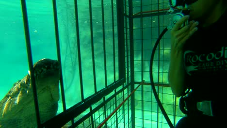 A-woman-cage-dives-with-African-crocodiles-on-the-Zambezi-River-in-Zimbabwe-Africa-1