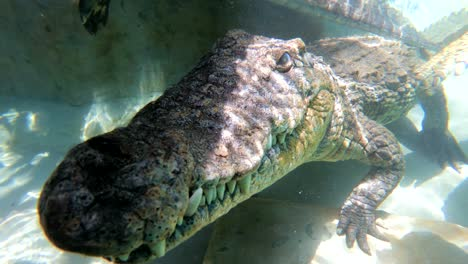 Underwater-shot-of-a-Zambezi-River-crocodile-in-Zimbabwe-Africa