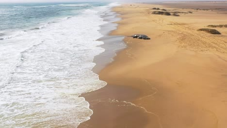 Incredible-aerial-shot-of-a-humpback-dead-whale-lying-on-an-abandoned-beach-along-the-Skeleton-Coast-of-Namibia-1