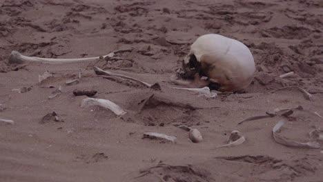 Esqueleto-Humano-Restos-Esqueléticos-Yacen-En-La-Arena-A-Lo-Largo-De-Una-Parte-Remota-De-La-Costa-De-Los-Esqueletos-Del-Océano-Atlántico-Namibia-África