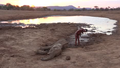 A-San-native-African-tribesman-stands-beside-a-dead-poached-young-elephant-beside-a-watering-hole-on-the-plains-of-Africa-a-victim-of-poaching-1