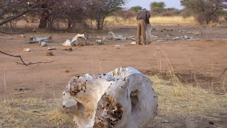 The-dead-skeleton-remains-of-a-poached-African-elephant-sit-on-the-dry-plains-of-Africa