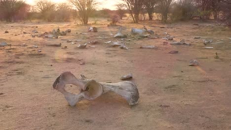 The-dead-skeleton-remains-of-a-poached-African-elephant-sit-on-the-dry-plains-of-Africa-2