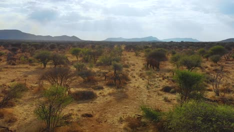 A-aerial-over-a-magnificent-solo-elephant-standing-on-the-savannah-of-Africa-in-Erindi-Park-Namibia