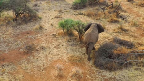 Great-drone-aerial-over-a-solo-beautiful-elephant-joining-another-elephant-on-the-savannah-in-Africa-on-safari-in-Erindi-Park-Namibia