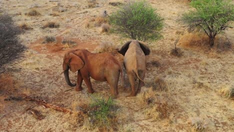 Great-drone-aerial-over-a-two-beautiful-African-elephants-on-the-savannah-in-Africa-on-safari-in-Erindi-Park-Namibia-1