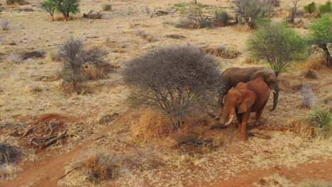 Great-drone-aerial-over-a-two-beautiful-African-elephants-on-the-savannah-in-Africa-on-safari-in-Erindi-Park-Namibia-2
