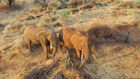Great-drone-aerial-over-a-two-beautiful-African-elephants-on-the-savannah-in-Africa-on-safari-in-Erindi-Park-Namibia-3