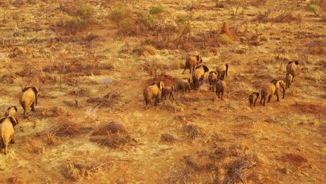 Drohnenantenne-über-Einer-Riesigen-Familienherde-Afrikanischer-Elefanten-Die-Sich-Durch-Den-Busch-Und-Die-Savanne-Afrikas-Bewegt-Erindi-Park-Namibia-2
