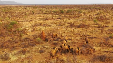 Drone-aerial-over-a-huge-family-herd-of-African-elephants-moving-through-the-bush-and-savannah-of-Africa-Erindi-Park-Namibia-3