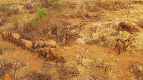 Antena-Drone-Sobre-Una-Enorme-Manada-Familiar-De-Elefantes-Africanos-Moviéndose-A-Través-De-La-Selva-Y-La-Sabana-De-África-Parque-Erindi-Namibia-4