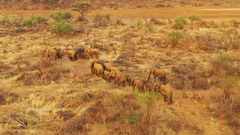 Drone-aerial-over-a-huge-family-herd-of-African-elephants-moving-through-the-bush-and-savannah-of-Africa-Erindi-Park-Namibia-5