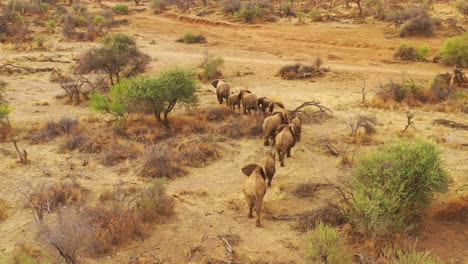 Drone-aerial-over-a-huge-family-herd-of-African-elephants-moving-through-the-bush-and-savannah-of-Africa-Erindi-Park-Namibia-6