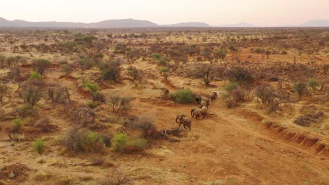 Drone-aerial-over-a-huge-family-herd-of-African-elephants-moving-through-the-bush-and-savannah-of-Africa-Erindi-Park-Namibia-7