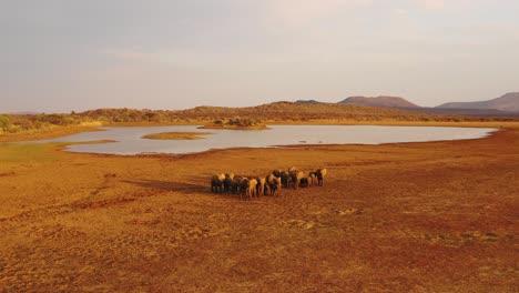 Increíble-Antena-De-Drones-Sobre-Una-Enorme-Manada-Familiar-De-Elefantes-Africanos-Moviéndose-A-Través-De-La-Selva-Y-La-Sabana-De-África-Erindi-Park-Namibia-2