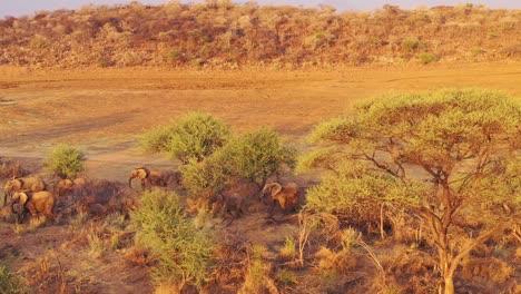 Unglaubliche-Drohnenantenne-über-Einer-Riesigen-Familienherde-Afrikanischer-Elefanten-Die-Sich-Durch-Den-Busch-Und-Die-Savanne-Afrikas-Bewegt-Erindi-Park-Namibia-3
