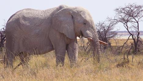 Wunderschöner-Und-Seltener-Weißer-Elefant-Auf-Der-Salzpfanne-Bedeckt-Mit-Weißem-Staub-Im-Etosha-Nationalpark-Namibia-Afrika-2n