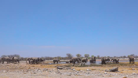 A-large-group-of-African-elephants-playfully-bathe-and-splash-at-a-watering-hole-at-Etosha-National-Park-Namibia-Africa