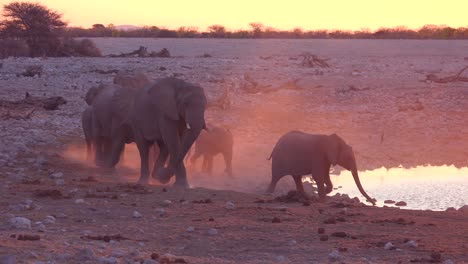 Thirsty-African-elephants-arrive-at-a-watering-hole-at-dusk-in-golden-light-and-bathe-and-drink-at-Etosha-National-Park-namibia