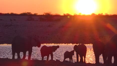 Thirsty-African-elephants-arrive-at-a-watering-hole-at-dusk-in-golden-sunset-light-and-bathe-and-drink-at-Etosha-National-Park-namibia
