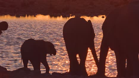 Thirsty-African-elephants-arrive-at-a-watering-hole-at-dusk-in-golden-sunset-light-and-bathe-and-drink-at-Etosha-National-Park-namibia-1