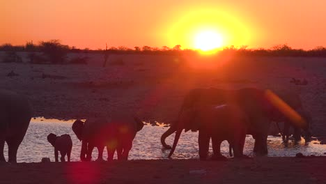 Thirsty-African-elephants-arrive-at-a-watering-hole-at-dusk-in-golden-sunset-light-and-bathe-and-drink-at-Etosha-National-Park-namibia-2